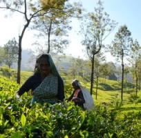 Groepsrondreis Sri Lanka en Malediven