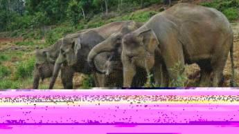 Bouwsteen 15 dagen avontuurlijk Noord-West Sumatra