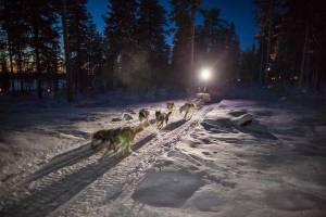 Avondsafari met Huskies