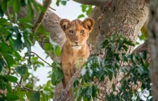 Rondreis OEGANDA, KENIA EN TANZANIA - 27 dagen; Safari rond het