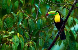 Rondreis COSTA RICA - 21 dagen; 'El Dorado' voor natuurliefhebbe