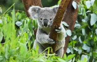 Rondreis AUSTRALIË HOOGTEPUNTEN - 30 dagen; Land van kangoeroes