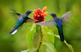 Rondreis COSTA RICA - 15 dagen; Palmstrand, vulkanen en boomkikk