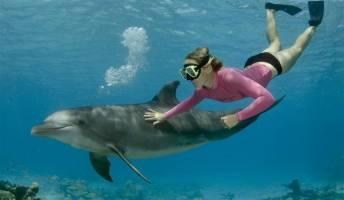 Snorkelen met dolfijnen
