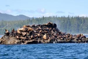 Walbeobachtung in Port Renfrew und Wildtiertour