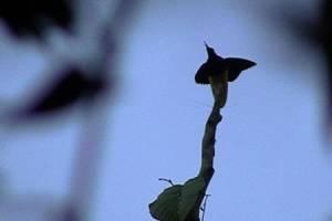 Bouwsteen 2 dagen Paradijsvogels Nimbrokan